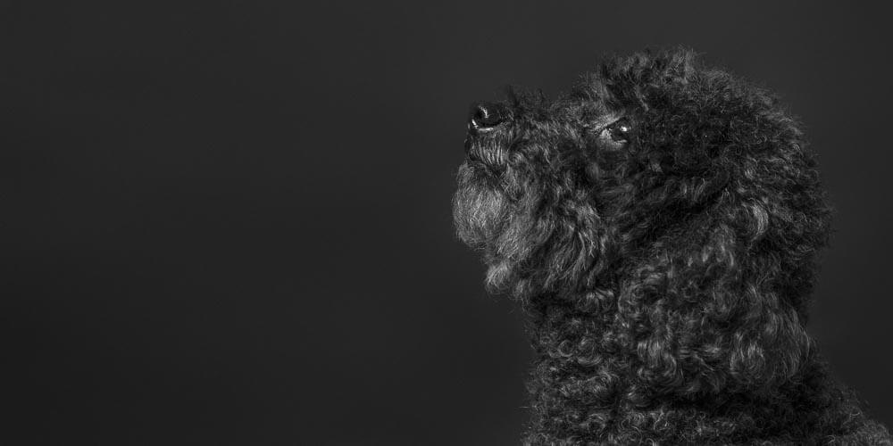 Black dog portrait on black photographed by Mark Hewitson Photography of Thame, Oxfordshire