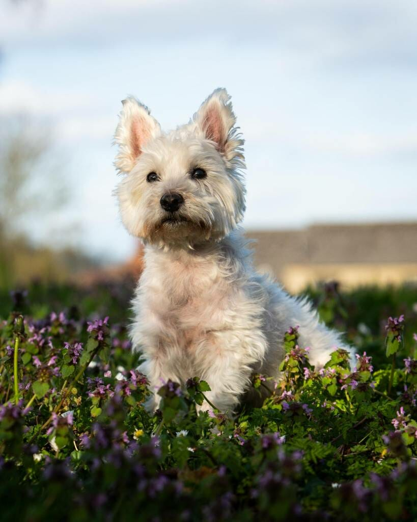 Location Dog Photography by Mark Hewitson Photography of Thame, Oxfordshire