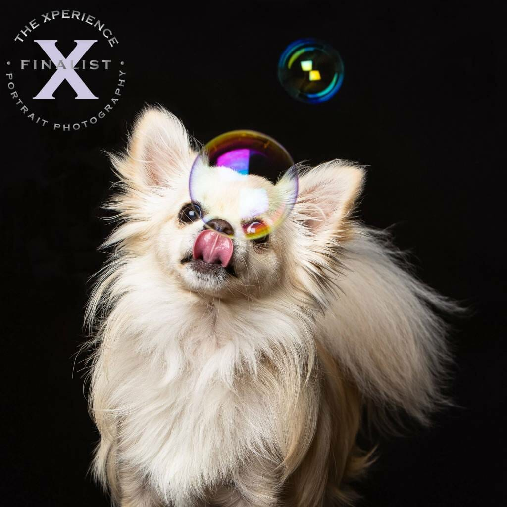 Xperience Awards Finalist Image - Top Dog Creative - Mark Hewitson Photography of Thame, Oxfordshire