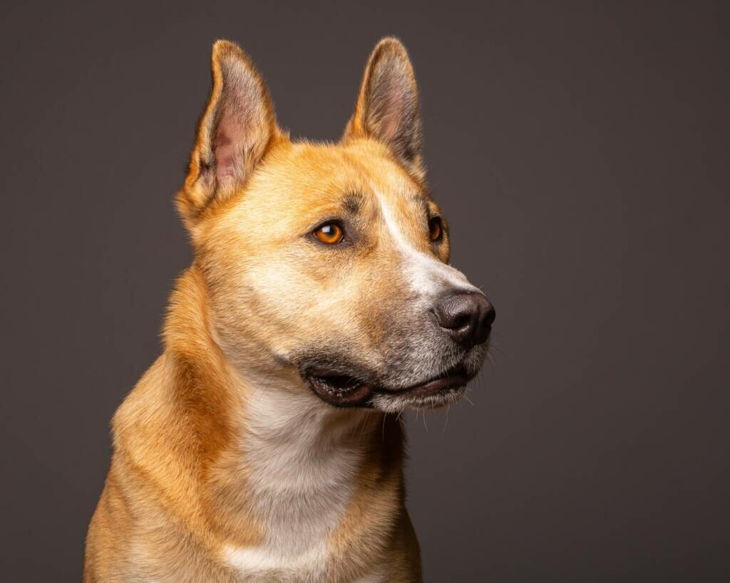 Dog Portrait by Mark Hewitson of Mark Hewitson Photography, Thame, Oxfordshire